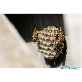 【東海エリア】蜂の巣・害虫駆除 6,000円