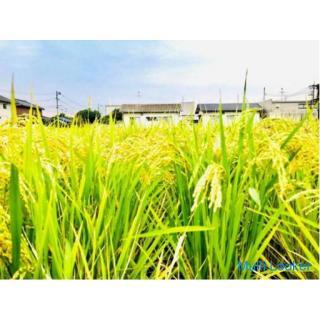 お米作り 稲刈り 岡山市南区